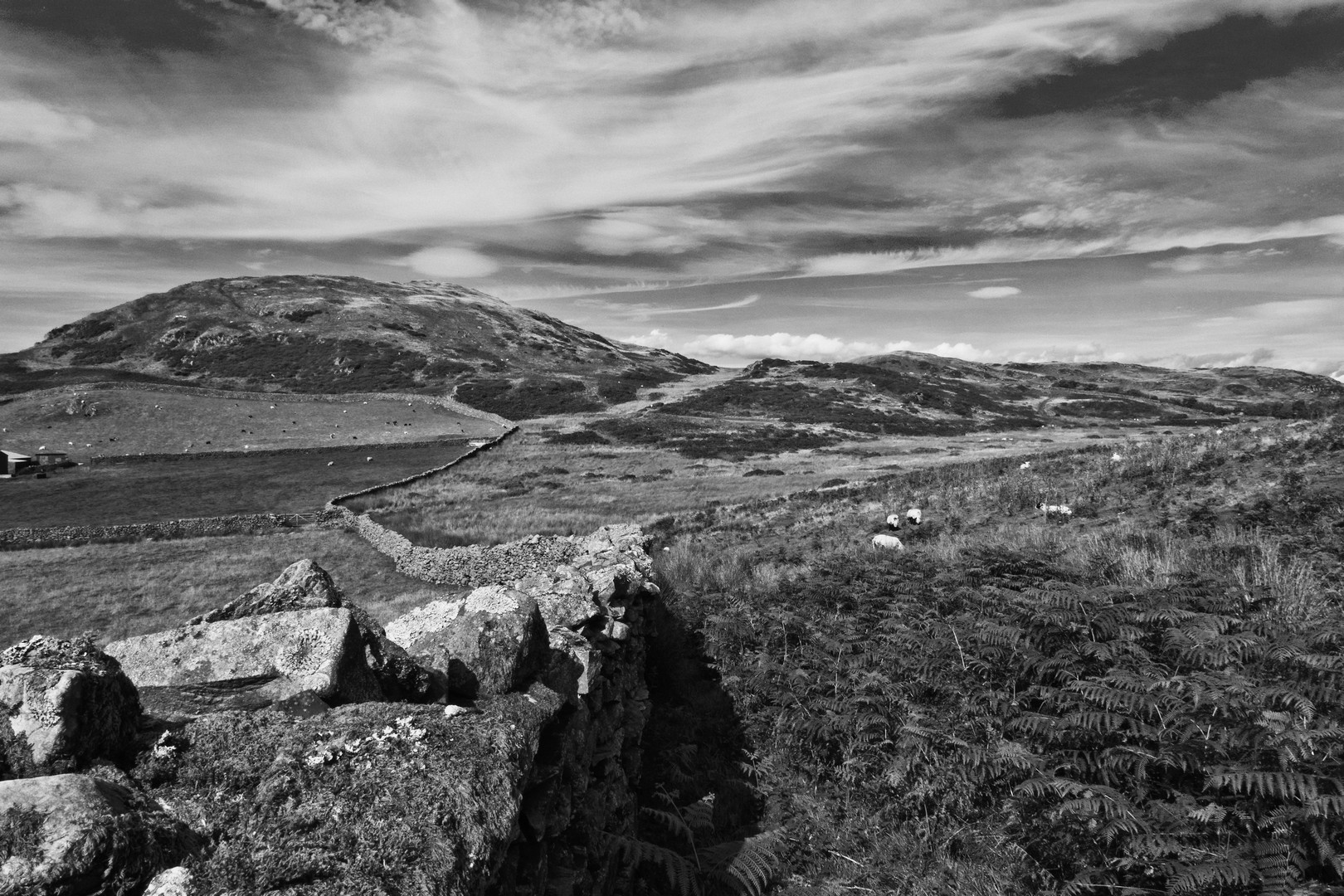 Black and white photo of a dry stone wall in the West Lakes